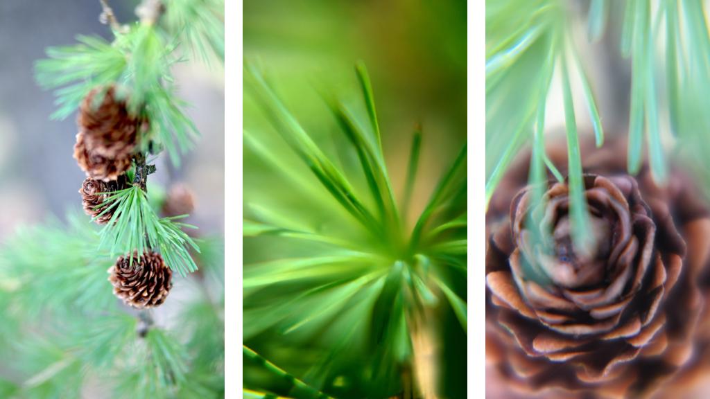 Wandbeispiel-Bildkomposition-fotografie-LEO-and-FISH-malte-Galerie-photography-klein-